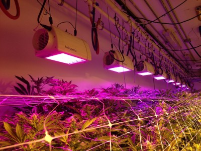 The Benefits of Using LED Lights for Indoor Plants