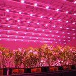 The advantages of using LED grow lights than other light sources
