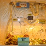 Why Grow Tent is Perfect For Growing Plants Indoors?
