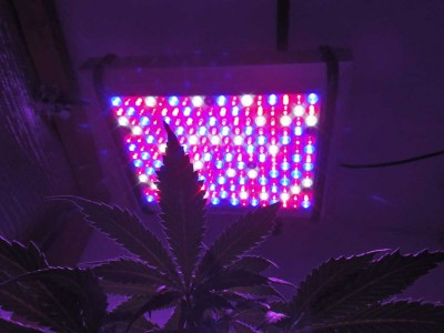 Why You Should Care About LED Grow Lights
