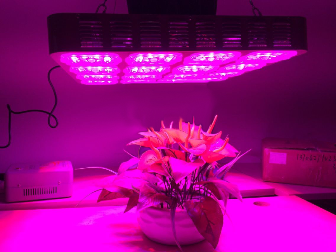 Improving the Growth of Plants by Use of Grow Lights